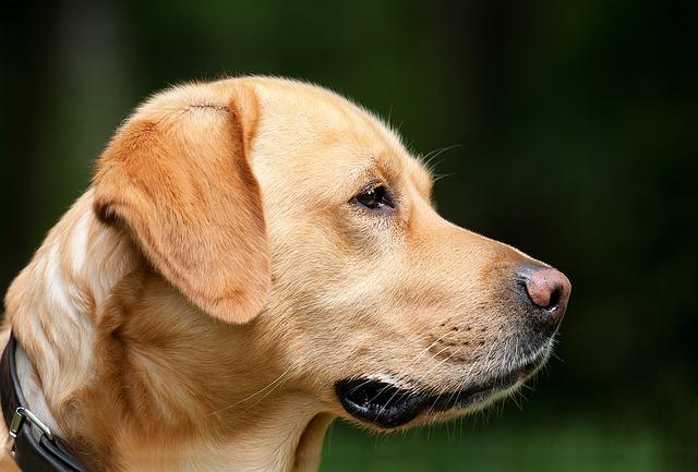 dog-1194083_640